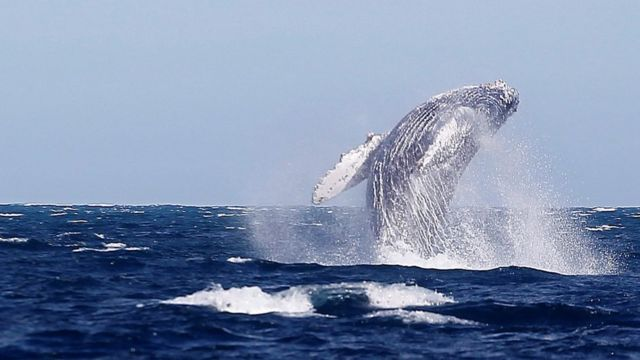A whale in the waters of Baja California Sur, Mexico, 27 February 2021