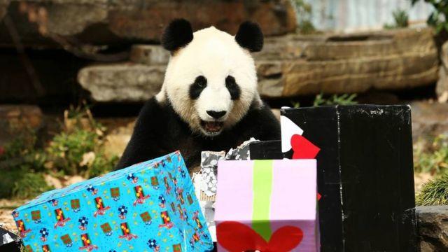 China regaló osos pandas a Estados Unidos.