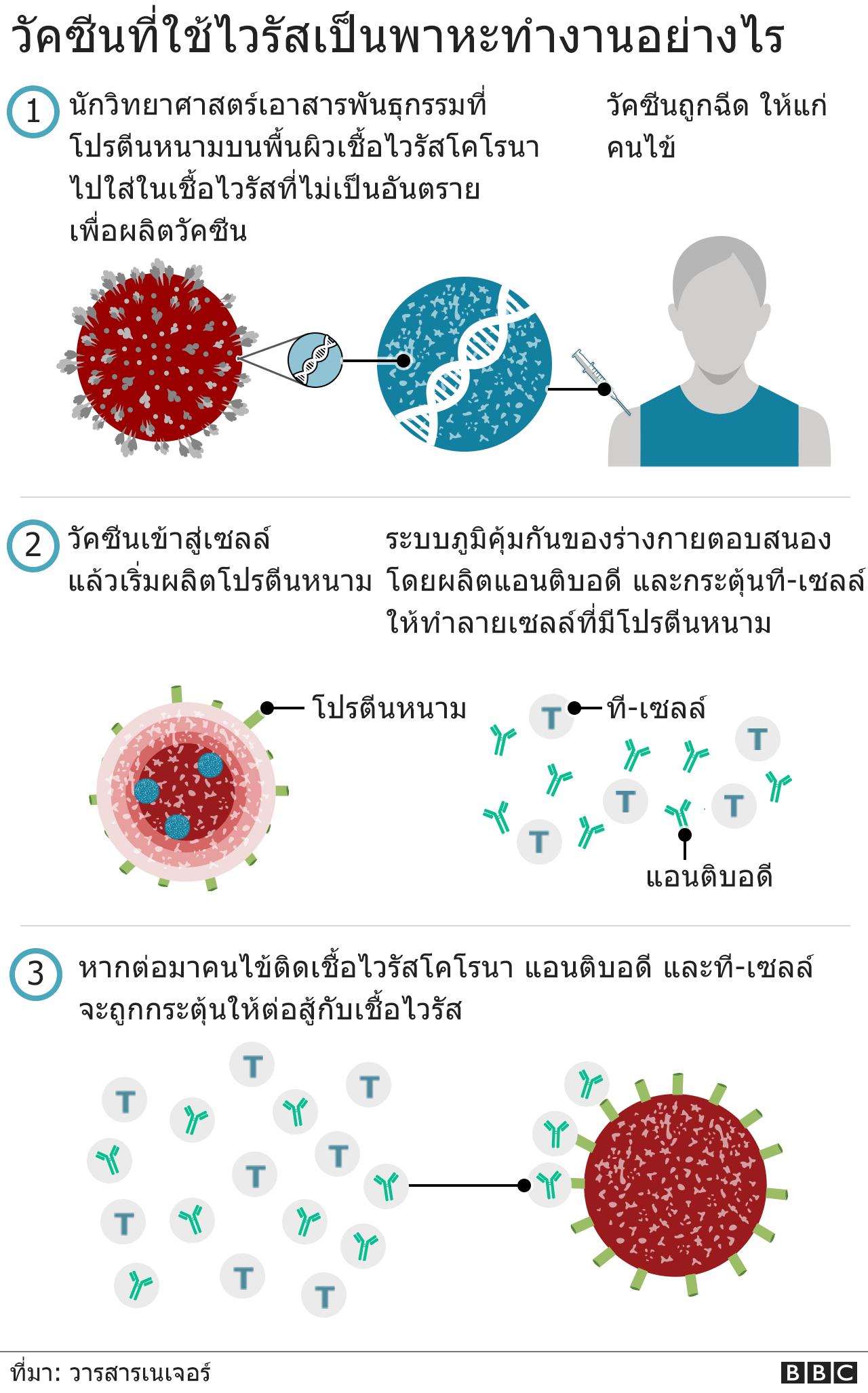 วัคซีนอ็อกซ์ฟอร์ด-แอสตร้าเซนเนก้า ทำงานอย่างไร