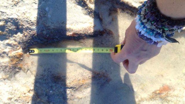 Бинди измеряет длину следов