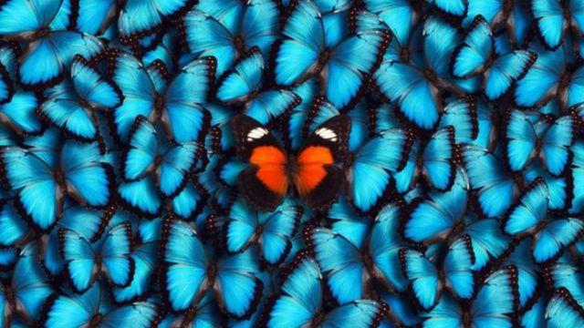Foto de borboletas