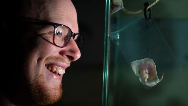 Baby ray grown in sandwich bag at Aberdeenshire aquarium