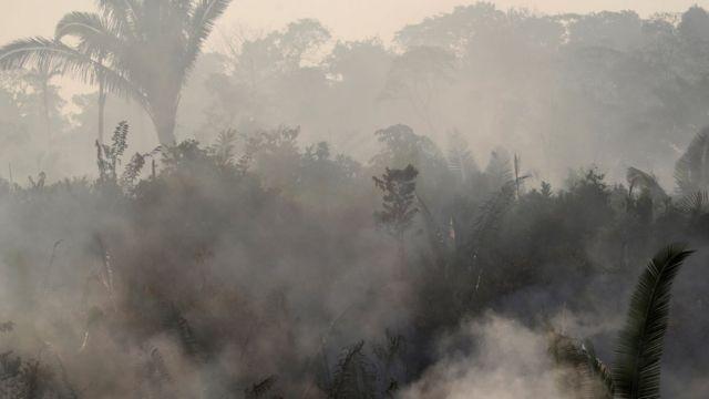 雨林中升起的濃煙