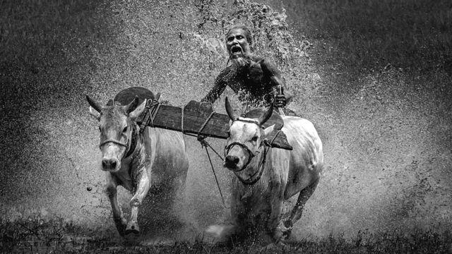 Человек участвует в Кумбале - ежегодных бегах буйволов
