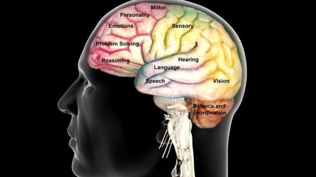 Звуковые сигналы обрабатываются слуховым участком мозга, а за движение отвечает двигательная область коры головного мозга