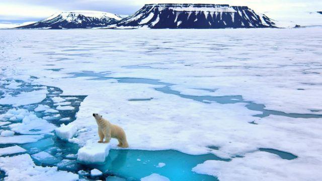 Un oso en el Ártico