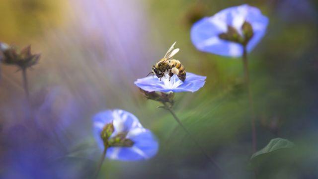 Winning photos from beautiful gardens