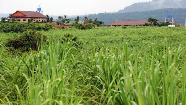 ภาพไร่อ้อยในกัมพูชาเมื่อปี 2012 ซึ่งนักรณรงค์ระบุว่าอุตสาหกรรมส่งออกน้ำตาลที่เติบโตอย่างรวดเร็ว ทำให้เกิดการแย่งยึดที่ดินในประเทศและทำให้ชาวบ้านหลายพันคนต้องอพยพออกจากที่ดินทำกิน
