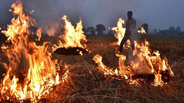 Фермеры сжигают стерню в Индии, ноя 19