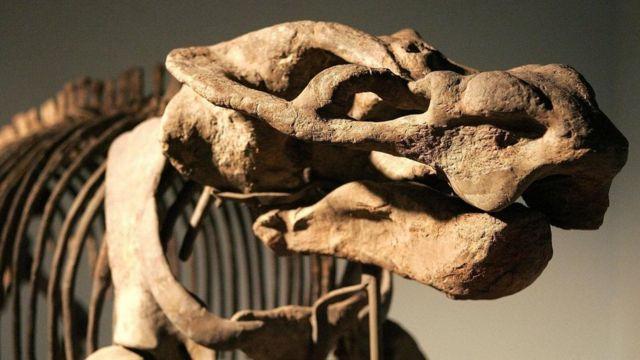 O synapsida, que viveu 160 milhões de anos atrás, é apontado como o primeiro animal produtor de leite