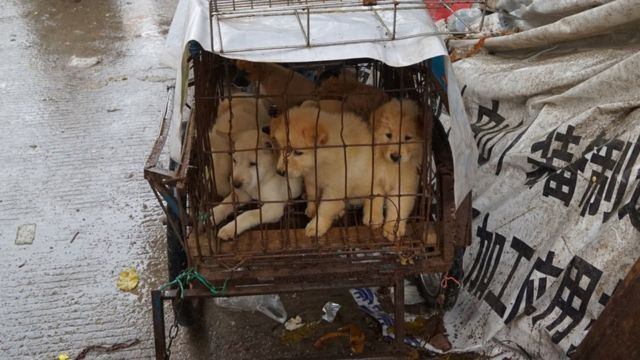 Puppies are seen in a cage at a dog meat market in Yulin, in China's southern Guangxi region on June 21, 2017