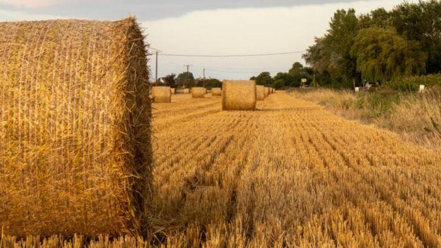 Линкольнширское поле