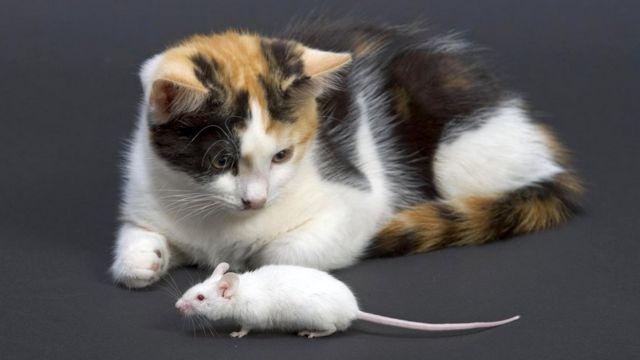Бесстрашие не входит в число мышиных добродетелей