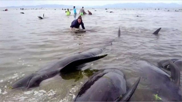 "Abantu barimwo abitanga bagerageza gusubiza ""baleines"" mu mazi menshi"