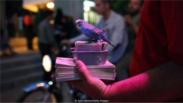 pássaros e cartas