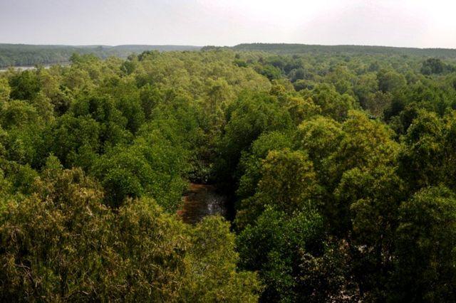 Hutan Vietnam