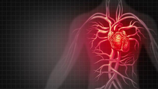 Ilustração do coração no corpo humano