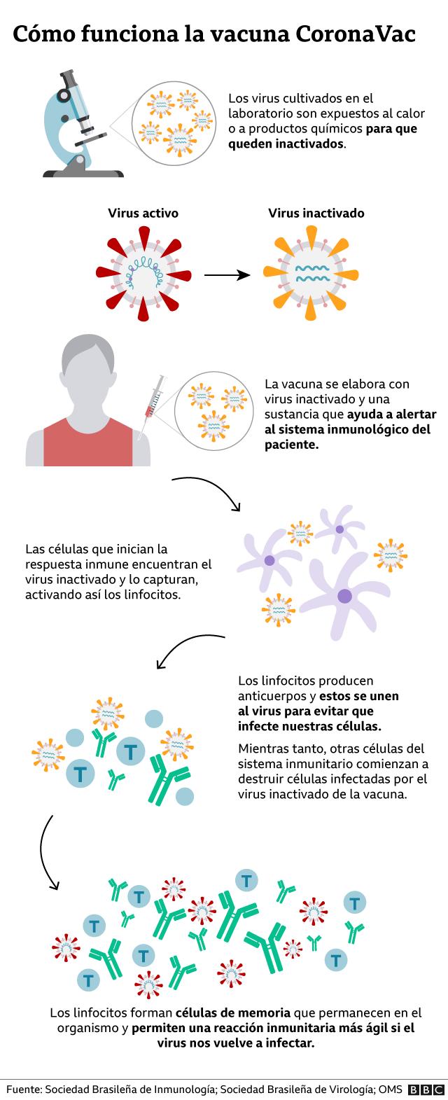 gráfico de cómo funciona la vacuna CoronaVac