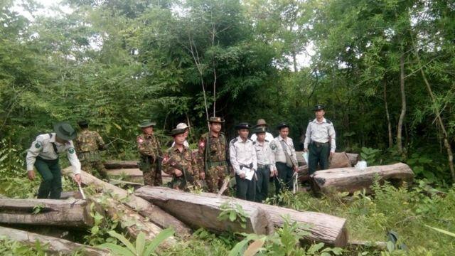 အဲဒီပမာဏသစ်တောတွေဆုံးရှုံးမှုကြောင့် မြန်မာနိုင်ငံမှာ ကာဗွန်ဒိုင်အောက်ဆိုဒ် ၃၃၅ မက်ထရစ် အထိထုတ်လွှတ်နေပါတယ်။