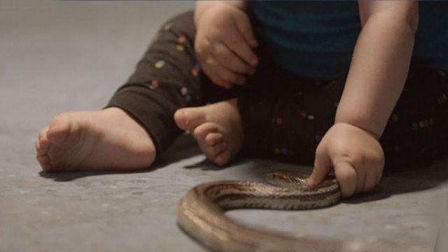 Bebé tocando culebra