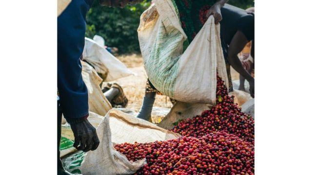 يبلغ متوسط عمر المزارعين في أفريقيا حوالي 60 عاما