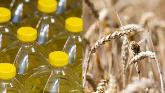 Олія та пшениця