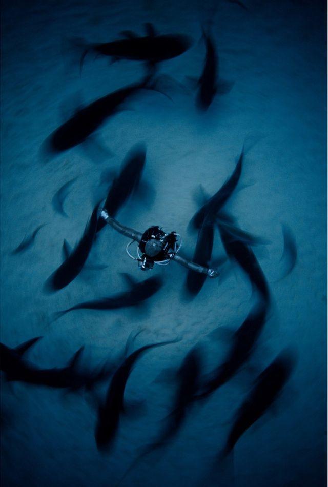 Cristina Zenato rodeada de tiburones en Bahamas.