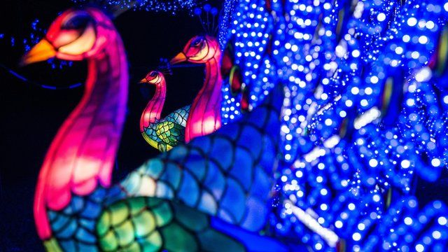 spectacular lighting. Chinese Lunar New Year: Spectacular Light Show Lighting