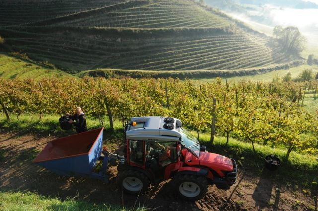 Will France's new wine regions threaten Champagne tradition?