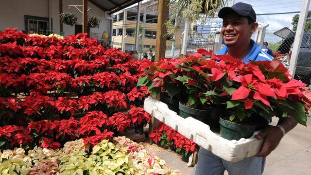 Comerciante de flor de Nochebuena en México