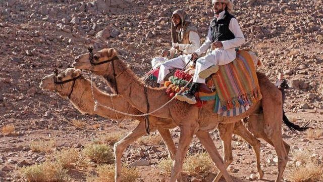 Homens em camelo