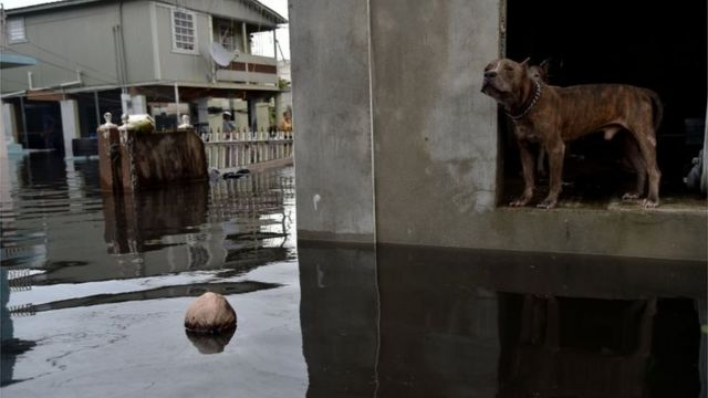 Perro rodeado de inundaciones en Puerto Rico