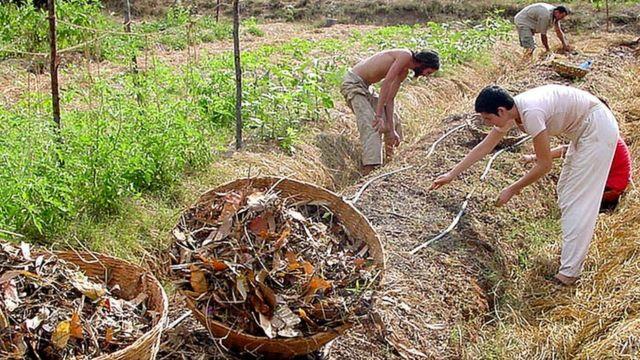 Cultivando em Auroville