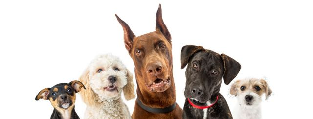 Dogs of various sizes close-up