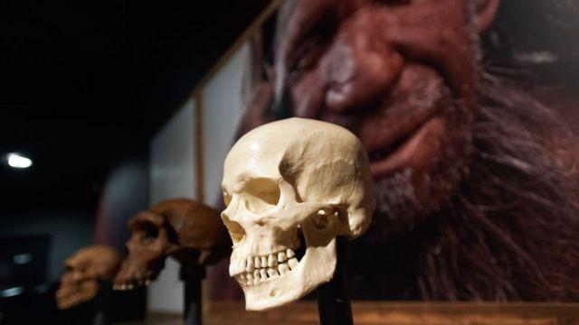 Exposición sobre los neandertales en un museo de Toulouse, Francia