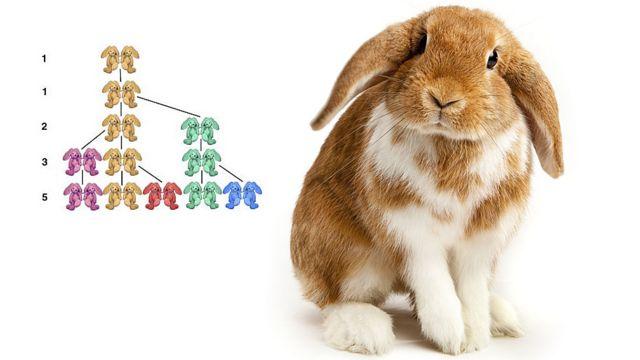 Conejo curioso e ilustración de la reproducción