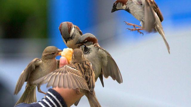 La mano de una persona alimentando unos pájaros