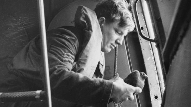 Releasing carrier pigeon from an airplane, 1941