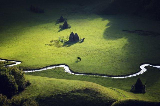 언덕 위에서 한가로이 풀을 뜯고 있는 말의 모습