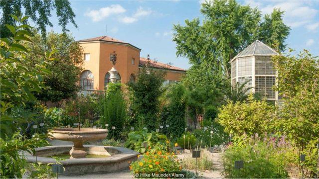 jardim botânico da Universidade de Pádua