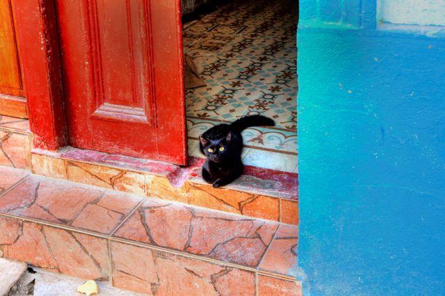 Eski Havana'da Aguilar sokakta bir kedi