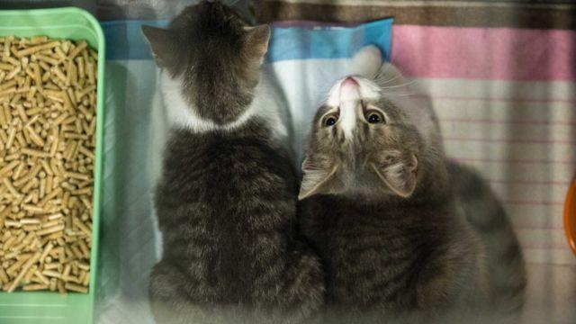 Mace u kavezu