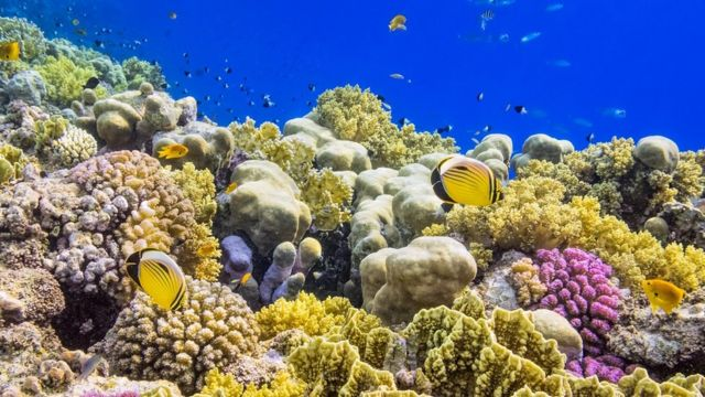 Colourful Coral Reef on Red Sea nearby Marsa Alam.
