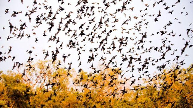 خفافيش تخرج من كهف جيري في المكسيك