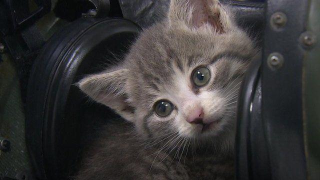 Tigger the kitten