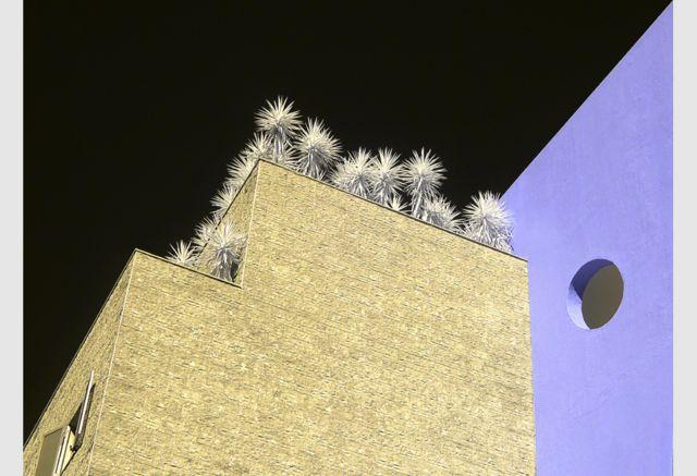 Roof Garden by Dina Vieira