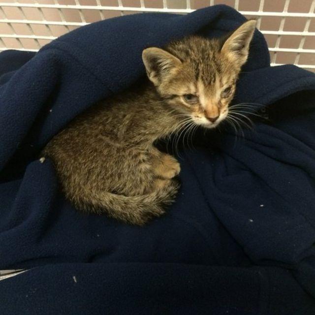 Stowaway Spanish kitten Paella to be re-homed in Hampshire