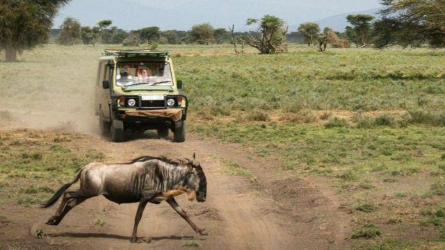 Safari katika mbunga ya Serengeti nchini Tanzania