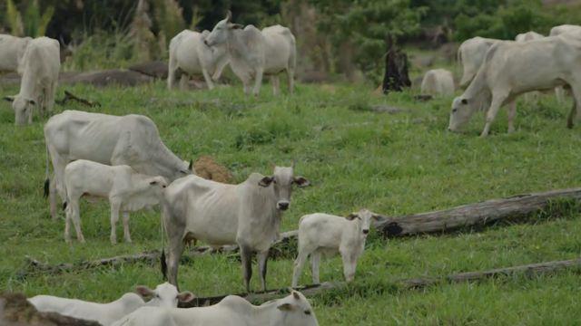 Fazenda de gado na região de Monte Negro (RO).