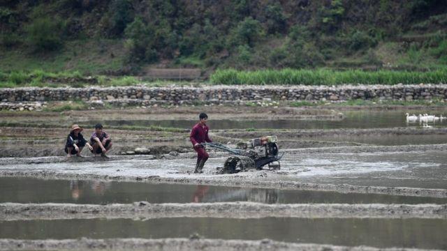 Hơn bốn chục năm sau 1975 nông dân Việt Nam vẫn đối mặt tình trạng lạc hậu, nghèo đói